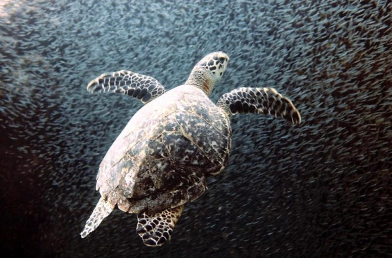 Impactantes fotografías de la vida marina, un mundo bajo el agua repleto de magia - foto-12-dia-del-oceano-dia-del-mar-dia-adel-oceano-google-amazon-google-fotografia-fernanda-narchi