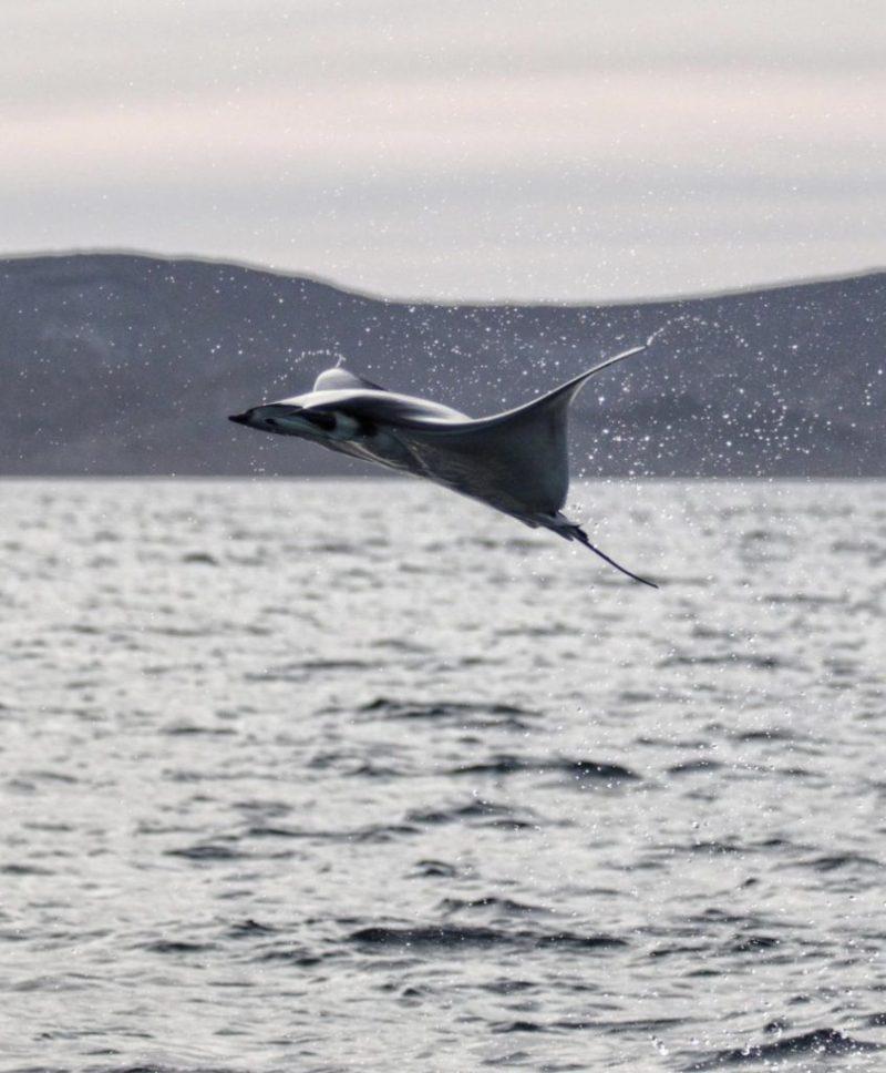 Impactantes fotografías de la vida marina, un mundo bajo el agua repleto de magia - foto-4-dia-del-oceano-fernanda-narchi-dia-del-oceano