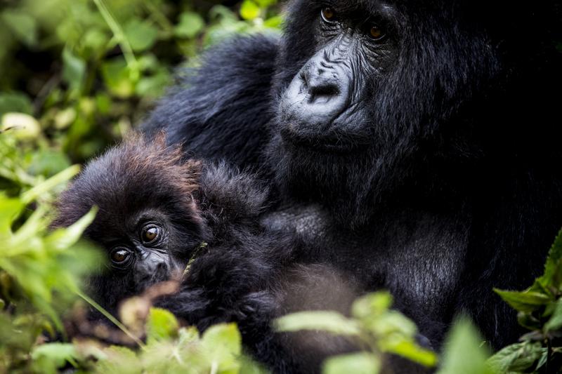 Traveler 101: la auténtica guía para viajar a África este verano - bisate-ws-crookesandjackson-17-20