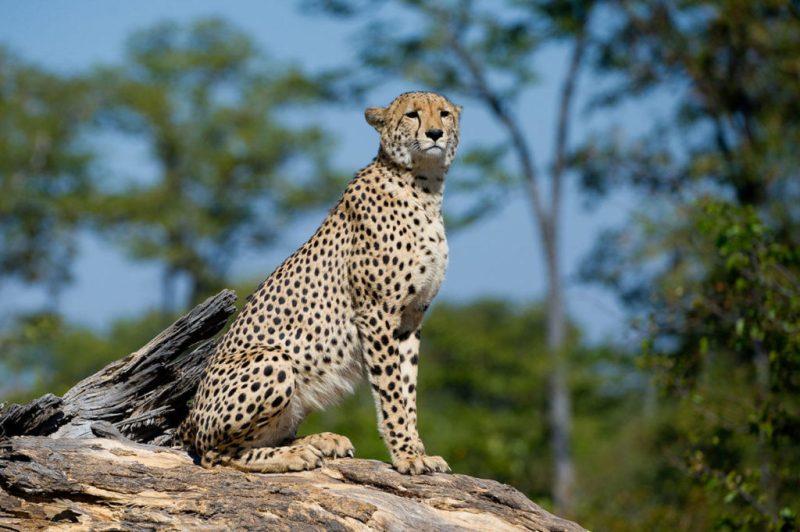 Traveler 101: la auténtica guía para viajar a África este verano - dumatau-camp