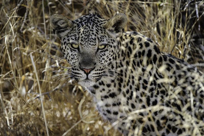 Traveler 101: cómo planear tu próximo viaje a África con Wilderness Safaris - kalahari-2012-06-157