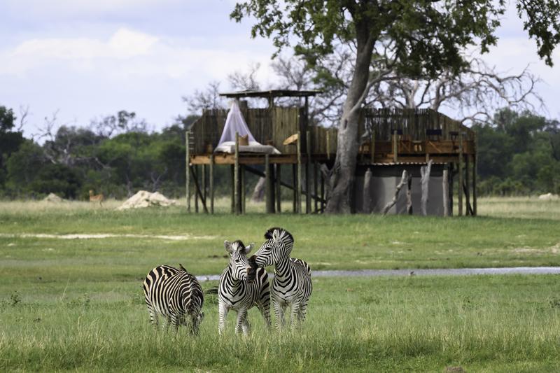 Traveler 101: cómo planear tu próximo viaje a África con Wilderness Safaris