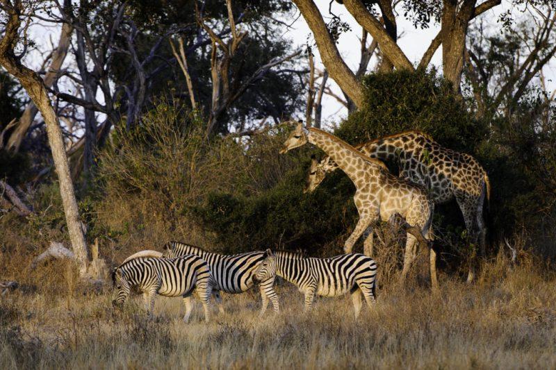 Traveler 101: la auténtica guía para viajar a África este verano - mombo-2012-06-206