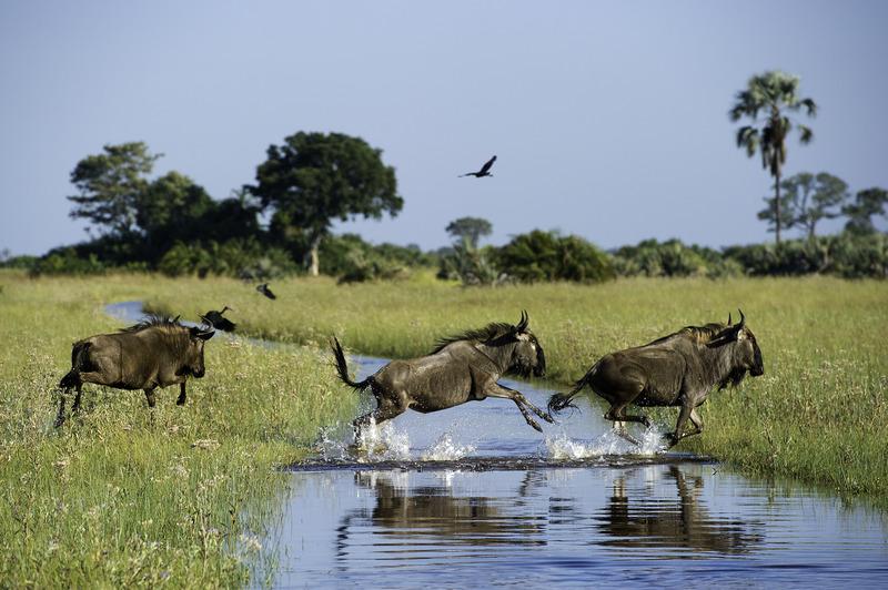 Traveler 101: cómo planear tu próximo viaje a África con Wilderness Safaris - nas408