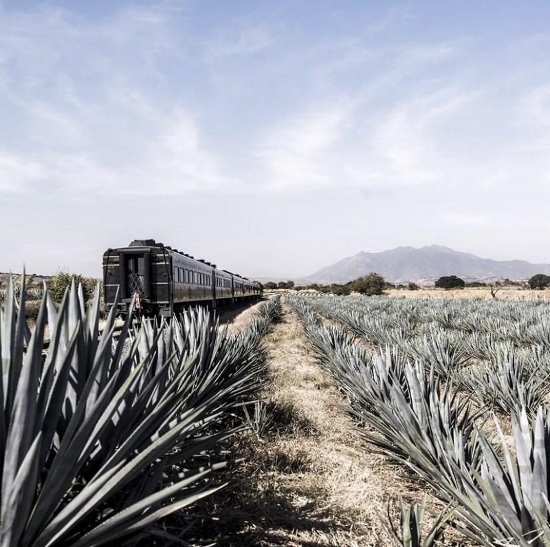 Jose Cuervo Express: un tour por la ruta del tequila - jose-cuervo-express2