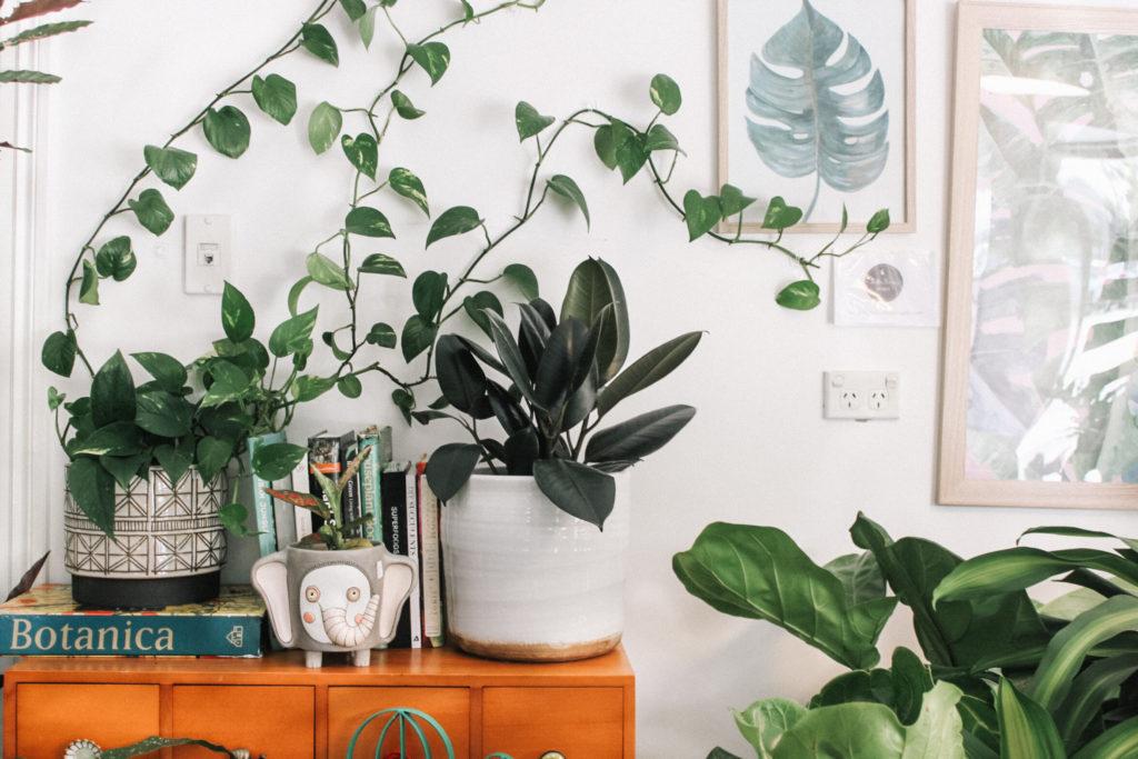 ¡Dale vida a tus espacios con más vida! Los mejores servicios de plantas a domicilio
