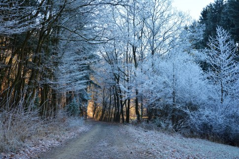 forest-path-1940731_1920