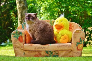 Imagem de gato sentado em sofá