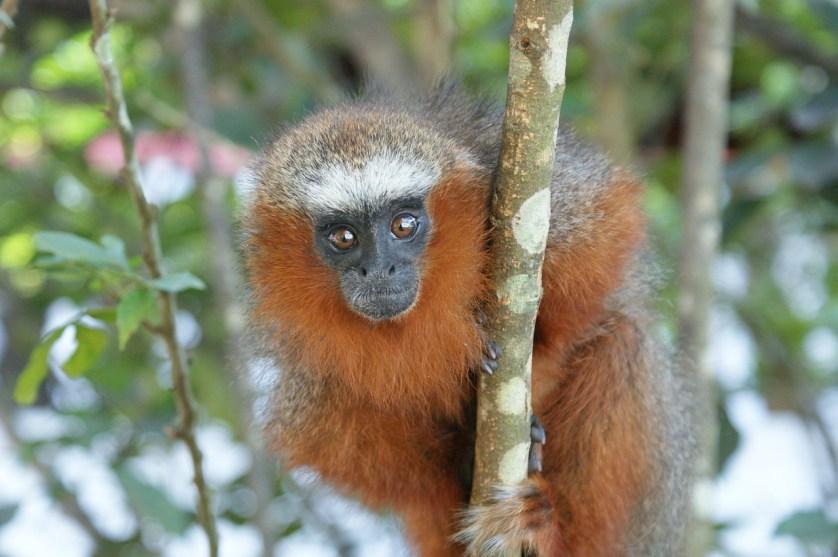 imagem-de-macaco-em-arvora