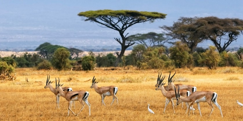 imagem-de-antelopes
