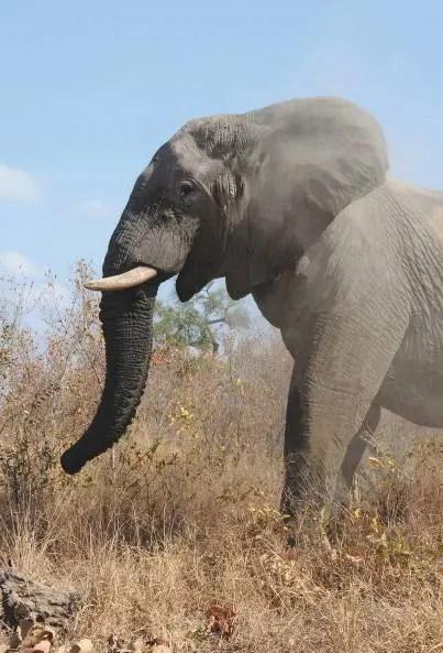 79_Londolozi-Lodge_Afrique-du-Sud_04