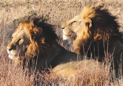 79_Londolozi-Lodge_Afrique-du-Sud_05