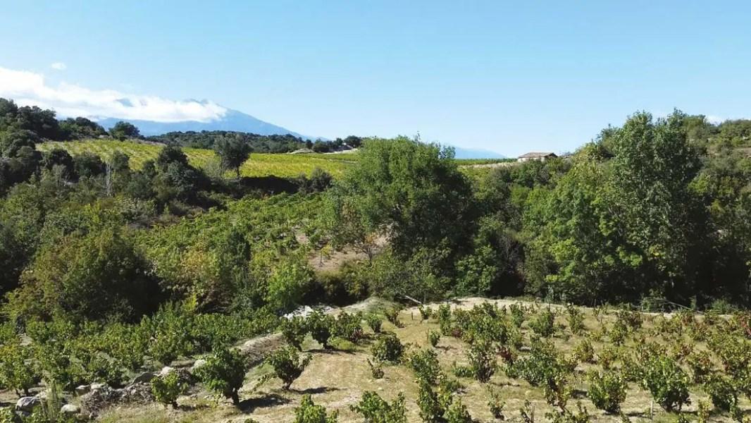 wine-safari-vignes-paysage