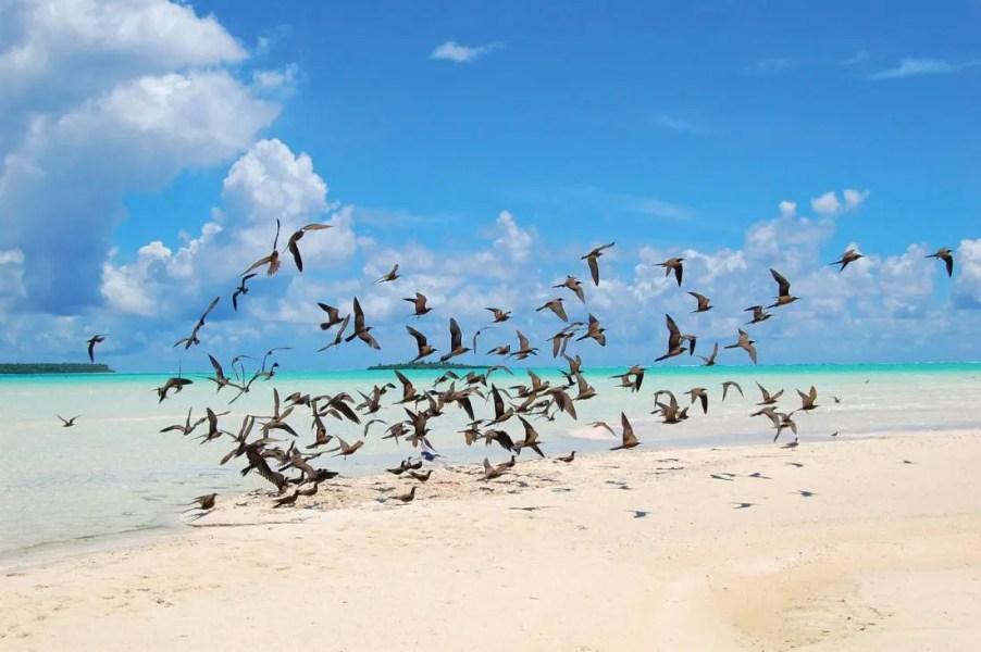 Birds_tmana-fauna13