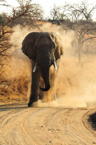•-Esiweni-Luxury-Safary-Lodge--Elephant--copie