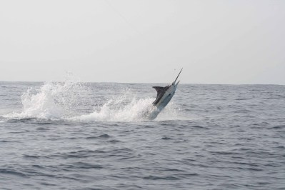 Pesca Ixtapa Zihuatanejo (1)
