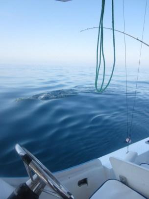 Pesca Ixtapa Zihuatanejo (44)