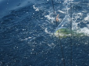 Pesca Ixtapa Zihuatanejo (45)