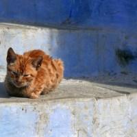 Katzen und Hunde legal mit nach Hause nehmen