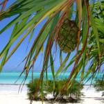 Reiseziel Sansibar