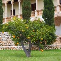 Ferien auf Mallorca im Sommer 2020?