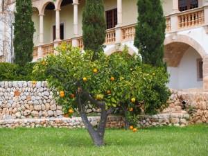 Mallorca in Corona Zeiten