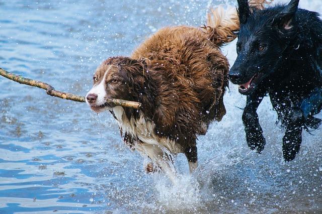 Urlaub für Hunde und Mensch