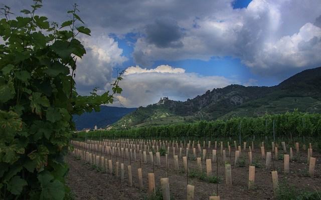 Weinbaugebiet Wachau