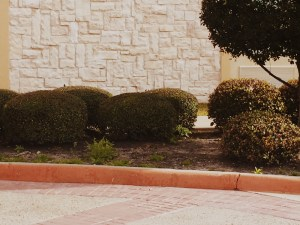 Here is another example of a lack of mulch with weeds taking over the soil under the shrubs. Many hotel operators simply do not understand the negative marketing message they are transmitting at the subliminal level.