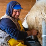 A Day In The Life Of A Sicilian Shepherd: Pt. I, Milking