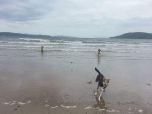 Dog walker in Niddrie