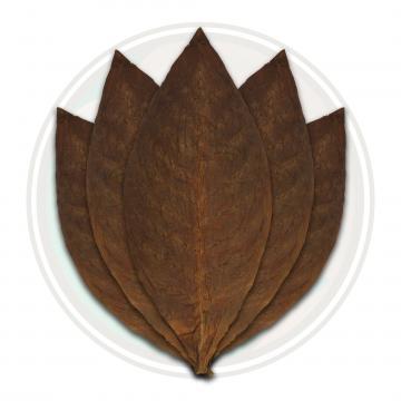 Mexican San Andres cigar wrapper leaf