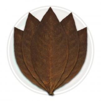 Mexican San Andres cigar wrapper leaf