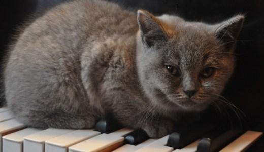 フジコヘミングの弟や旦那は?国籍や経歴を知りたい!猫の絵を調査!