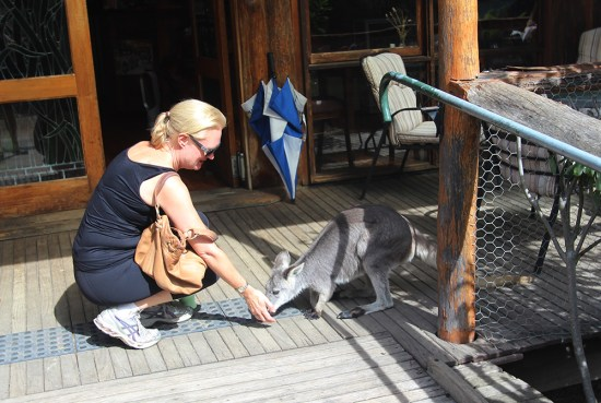 Patting a wallaby at the entrance of the cafe