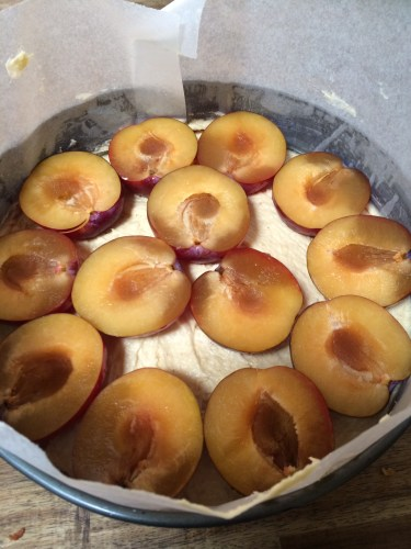 Plums on top of the batter (but not for long)