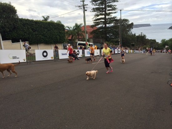 And yes, there's a dachshund in the race!