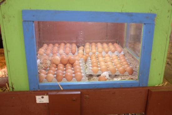Ready to hatch