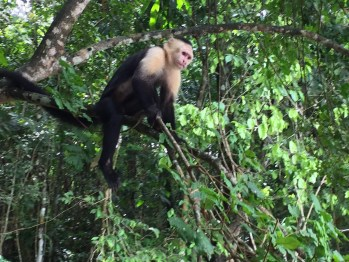 Money on Monkey Island Panama