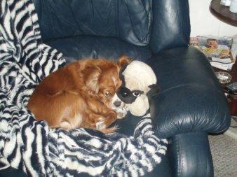 dog and stuff animal