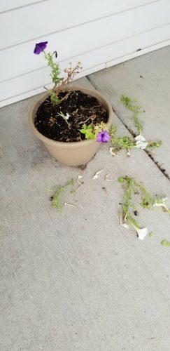 ruined flowers