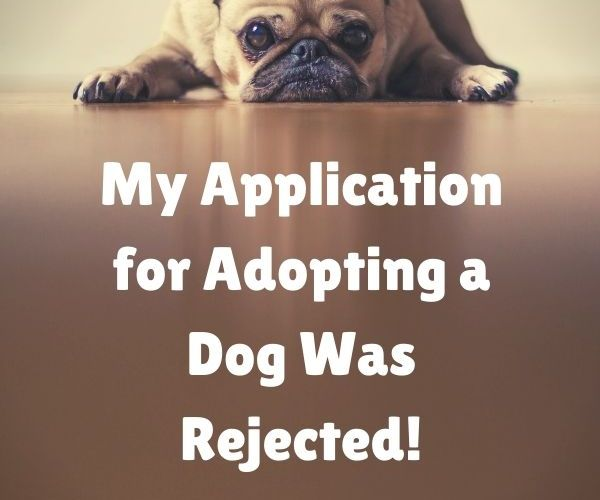 My Application for Adopting a Dog Was Rejected!