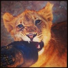 Lion cub - Joburg Lion Park, South Africa