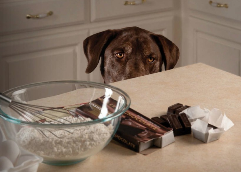 Chocolate Toxicity and Your Pet