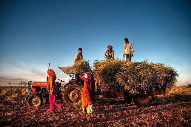 耕地面积比中国多,产量却不及中国一半,印度农业差在哪里?