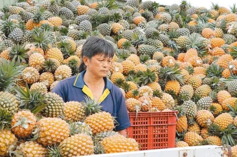 天灾人祸齐至?台湾除了莲雾和释迦,石斑养殖户开始慌了