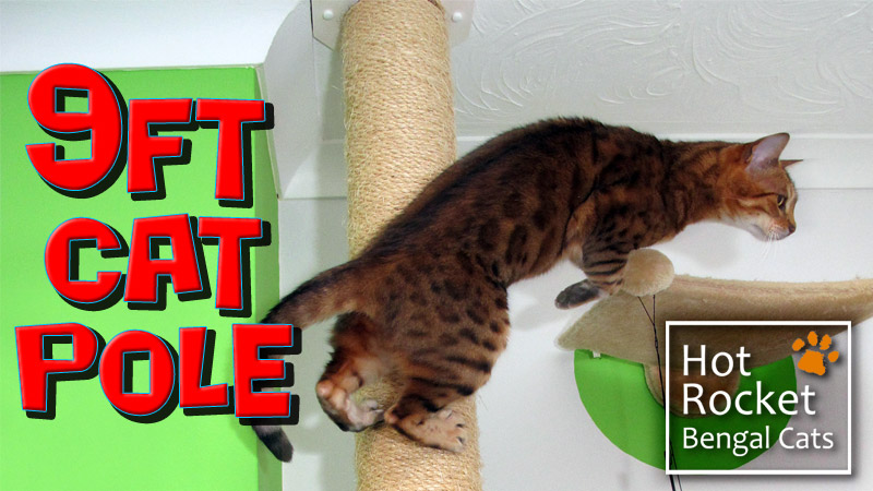 9ft tall scratch pole – Bengal cats just love to climb