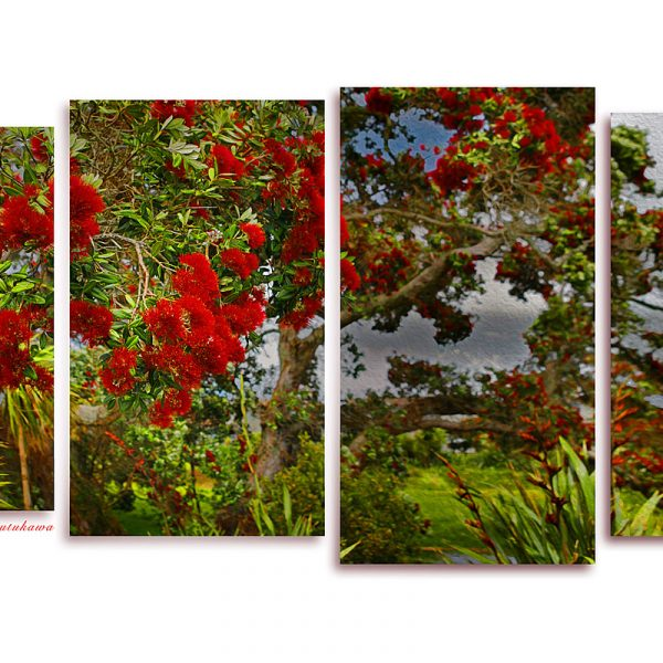 Fine art image of Pohutukawa at Christmas Time in New Zealand