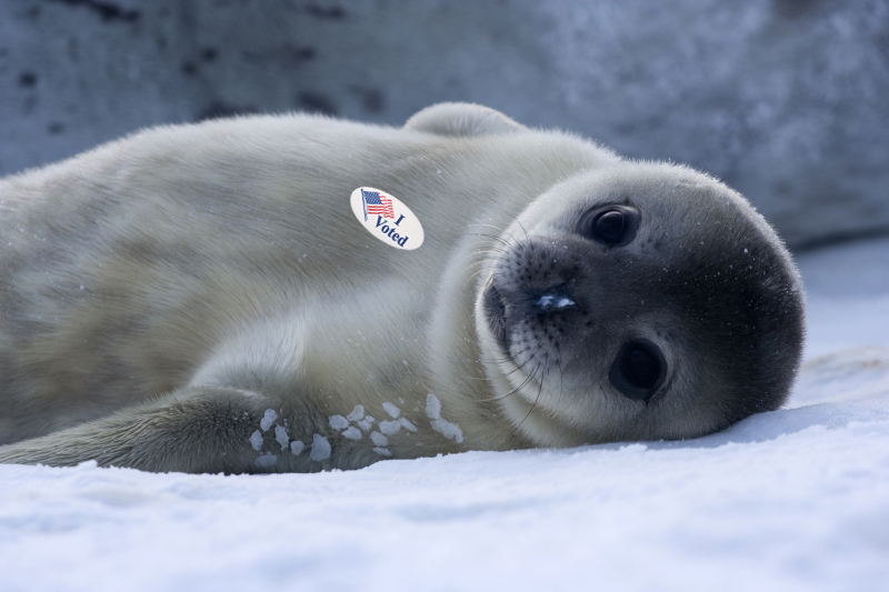 a baby seal who has voted