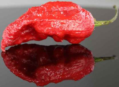 Red Bhut Jolokia Ghost Pepper Seeds